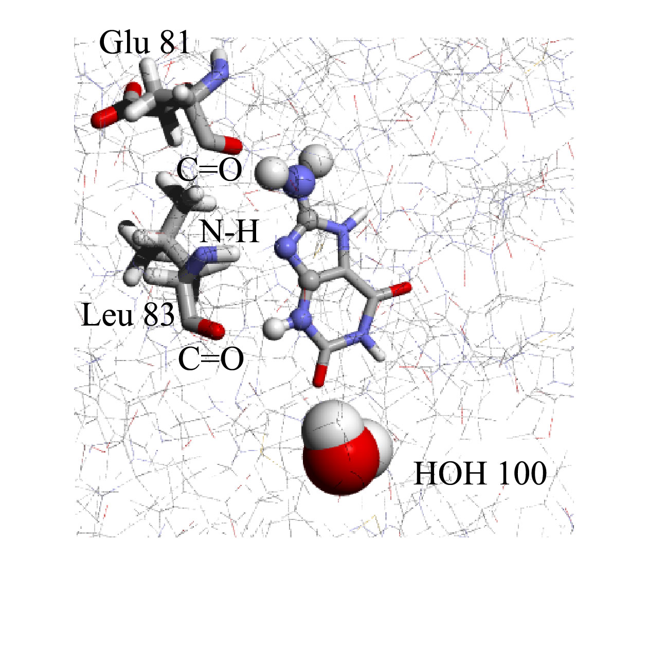 A.T. Garcia-Sosa, R.L. Mancera, The Effect of a Tightly-Bound Water Molecule on Scaffold Diversity in the Computer-Aided de novo Ligand Design of CDK2 Inhibitors, Journal of Molecular Modeling, J. Mol. Model. 2006, Vol. 12, Issue 4, 422-431 CDK2 water drug design de novo discovery ligand Abstract: We have determined the effects that tightly bound water molecules have on the de novo design of cyclin-dependent kinase-2 (CDK2) ligands.  In particular, we have analyzed the impact of a specific structural water molecule on the chemical diversity and binding mode of ligands generated through a de novo structure-based ligand generation method in the binding site of CDK2.  The tightly bound water molecule modifies the size and shape of the binding site and we have found that it also imposed constraints on the observed binding modes of the generated ligands.  This in turn had the indirect effect of reducing the chemical diversity of the underlying molecular scaffolds that were able to bind to the enzyme satisfactorily.